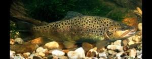 Fisch des Jahres 2005