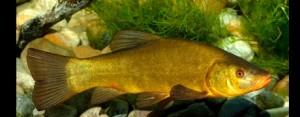 Fisch des Jahres 2007