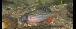 Fisch des Jahres 2008