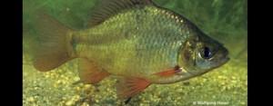 Fisch des Jahres 2010