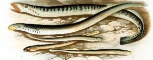 Fisch des Jahres 2012
